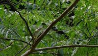 センダイムシクイさん - ベジタブルpartⅤ(鳥と共に日々是好日)