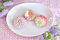 重陽の節句の菊練りきり 2018Homemade Chrysanthemum Nerikiri on Chrysanthemum Festival 2018 - お茶の時間にしましょうか-キャロ&ローラのちいさなまいにち- Caroline & Laura's tea break