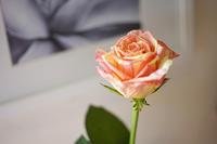 08 September  花を買う。 - Digital Diary
