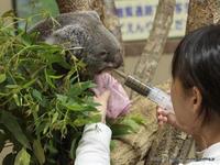 コアラと緑のジュース その2 - こらくふぁーむ