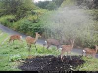 葡萄園の入口にいた鹿たち - ~葡萄と田舎時間~ 西田葡萄園のブログ