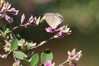 季節を感じる昆虫 - 野山の住認たちⅡ
