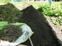 大根、人参の種まき(古民家畑)・・・テント壊したみたい - 化学物質過敏症・風のたより2