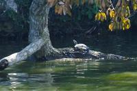 いつもの池で散策。アオサギ、紅葉など - ぶらり散歩 ~四季折々フォト日記~
