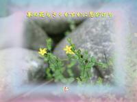 フォト575zrq1104『草の花ちさくかすかに忍びけり』 - 老仁のハッピーライフ