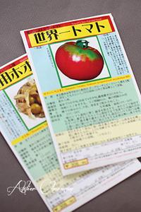 野口さんの昔のトマトのタネ - Atelier Charmant のボタニカル・水彩画ライフ