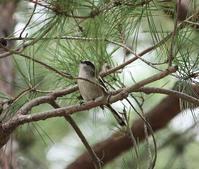今日の鳥さん 180907 - 万願寺通信