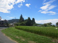 厳しい残暑の小川町ポタと花火大会 - じてんしゃでグルメ!3