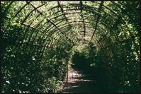 向島 -47 - Camellia-shige Gallery 2