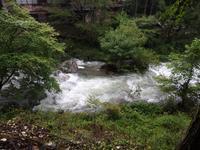 『郡上市美並の粥川で雨の日の植物散策~』 - 自然風の自然風だより