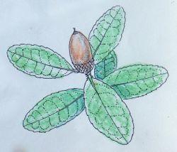 自然学習講座「秋の自然感察とスケッチ教室」のご案内 -