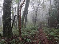 山越えして岩魚の谷へ(その2) - blog版 がおろ亭
