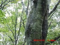 雨の日の桑ノ木台湿原 - 花立の花情報