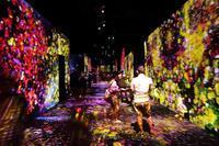 壁も、床も、入場者も作品の一部となった、デジタルアーツの   花の世界(お台場、デジタルアーツ美術館) - 旅プラスの日記