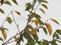鳥 - HAIKU/autumn PHOTO