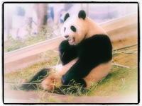 パンダの赤ちゃん、一般公開始まる! - 風に流され、気まま気まぐれ