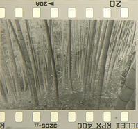 ネガ画像 Rollei RPX400(増感800)×Compard R09(1+50) - モノクロフィルム 現像とプリント 実例集
