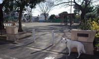 Vol.1388 大新田公園 - 小太郎の白っぽい世界