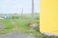 ノシャップ岬でおふたりで。 - Precious*恋するカメラ