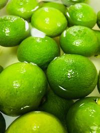 9月の「ミネラル発酵ドリンク教室」 - スリランカ  カレー& オーダーメイドコサージュ・バック Rosamala