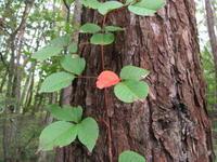 小さい秋… - モルゲンロート