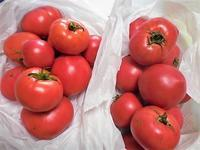 トマト - はあと・ドキドキ・らいふ