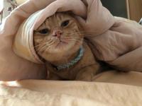 家出 - 愛犬家の猫日記