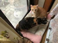 家出の続き - 愛犬家の猫日記