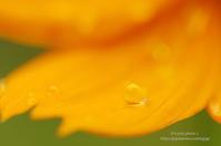 雨の欠片 - It's only photo 2