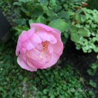秋色のガーデン - Bleu Belle Fleur☆ブルーベルフルール