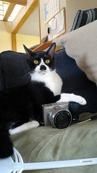 だいカメラマン - 雑記帳~信州の東のほうで。