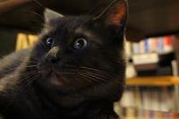 イイ顔してます - ぎんネコ☆はうす