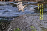 ヒガンバナも咲いて秋らしくなって来た! - Weblog : ちー3歩