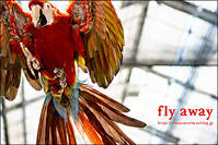 fly away - すずちゃんのカメラ!かめら!camera!
