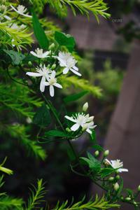 小さな庭のゆとり - CHIROのお庭しごと