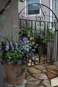 コンプレックスハーモニー - CHIROのお庭しごと
