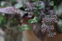好きな色の世界 - CHIROのお庭しごと