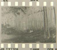 ネガ画像Rollei RPX400(増感800)×Kodak Xtol(1+1) - モノクロフィルム 現像とプリント 実例集