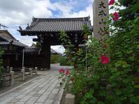 妙蓮寺の芙蓉 - 彩の気まぐれ写真