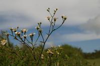 0911花火の花②と虫捕り - 清治の花便り