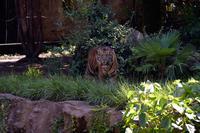 目が合う - 動物園へ行こう