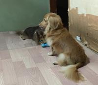 訴える犬 - きょうのはなwithくるみ~愛犬写真日記~