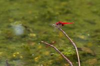 赤トンボと秋色 - 彩りの軌跡