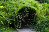 萩のトンネル - 彩りの軌跡