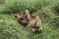 刈り草に吹かれて - 良え畝のブログ