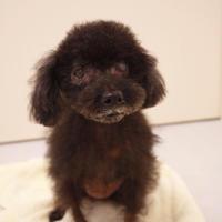 本日のトリミング - 宮城県富谷市明石台  くさか動物病院ブログ