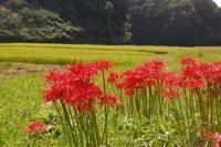 写真好きのための法律&マナー - 奈良・桜井の歴史と社会