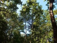 森は初秋 - 北緯44度の雑記帳
