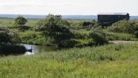 岩保木水門のタンチョウ - 湿原と海のそばで