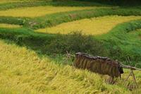 稲架掛けのある風景 - まほろば 写真俳句